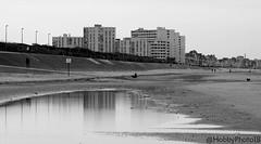 Entre les dunes et le sable mouillé