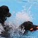 Hundeschwimmen+im+Freibad