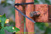 abetone (giordano torretta alias giokappadue) Tags: abetone cancello ruggine serratura
