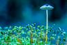 Blue Moon (Loop van Dike) Tags: pilze magicmoments mushroom beautifulexpression