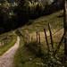 Beir Path
