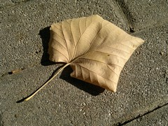 2017-09-18-11622 (vale 83) Tags: autumn leaf nokia n8 macrodreams coloursplosion colourartaward friends flickrcolour autofocus beautifulexpression