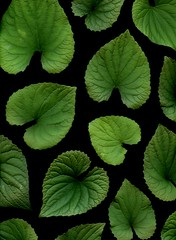 58564.01 Viola odorata (horticultural art) Tags: horticulturalart violaodorata viola violet leaves pattern mosaic