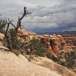 7223ex Canyonlands-- Needles area  **Explore** thumbnail
