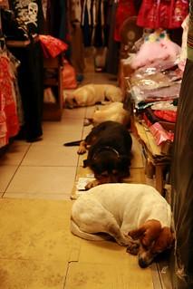 Dogs of Jiufen