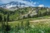 Wild Flowers on Mount Rainier (jeff's pixels) Tags: mountrainiernationalpark mountrainier wildflowers flower landscape nature mountain range sky nikon hiking washington pacificnorthwest