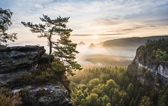 Lichtvoller Augenblick - luminous moment (Philipp Zieger - www.philippzieger-photographie.de) Tags: malerweg hiking wandern natur wald sun light magical magisch märchenhaft tal cliff mountain bergwelt licht nebel sonnenaufgang sunrise a6500 sony landscape landschaft kleinerwinterberg saxonswitzerland sächsischeschweiz elbsandsteingebirge