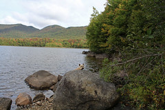 Jeter - 9/20/17 (myvreni) Tags: vermont summer nature outdoors animals dogs cairnterriers pets color foliage