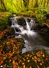 Autumn Falls. (MNM Photography 2014) Tags: autumnfalls autumn autumncolours autumnal fall waterfall water flowingwater flow leaves colourful stream trees landscape forest cascade river longexposure ferns beech moss burn seasons seasonal creek rocks swirl limavady countyderry northernireland ulster ireland downhilldemense castlerock hidden trails beechtrees orangeleaves colours canon5dmkiii canon1635mmf4isusm leefilters leelandscapepolarisingfilter graduatedfilter lee landscapephotography ngc