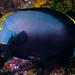 Black+velvet+Angelfish+-+Chaetodontoplus+melanosoma