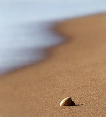 Lonely (PeskyMesky) Tags: aberdeenshire blackdog beach shell sand water minimal scotland flickr