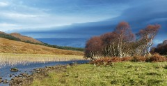 a stand (Edinburgh Nette ...) Tags: landscapes skye october17 torrin inlandlochs freshwaer reeds trees betula pendula sky cloudformations