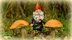 You'll be telling me next that you do not believe in Fairies either !! (Bob's Digital Eye) Tags: 2017 abstract autumn bobsdigitaleye canon canonefs1855mmf3556isll depthoffield fantasy flicker flickr fungi gnomes macro mushroom mushrooms t3i tinytreasuresinflora smileonsaturday
