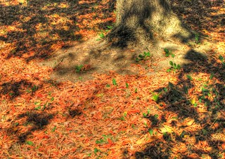 * Ombre sulle foglie * Shadows on the leaves *