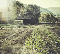 it's out by the barn (jssteak) Tags: canon t1i farm colorado chatfield botanicgardens fall crop barn trailer glare hdr