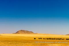 The wide landscape of the Namib Naukluft Park, Namibia (Ulrich Münstermann) Tags: africa afrika c14 khomasregion landschaft namibnaukluftpark namibia solitaire strase transportation wüste desert dry gravel hill landscape landschap piste road straat street transport tree trees nearsolitaire