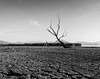 All alone (Giorgos.siat) Tags: pamvotis pamvotida tree trees black white blackandwhite shore lake lakeside landscape d3200 nikon photography greece greek ελλαδα ελλασ hellas hellenic epirus hpeiros ηπειροσ ιωαννινα γιαννενα ioannina giannina cracked crack dark waterscape exposure lights nature outdoor outdoors monochrome
