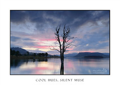 Cool hues over the lake with large tree and nest (sugarbellaleah) Tags: cool hues dusk tree lake serene sublte colour clouds light evening pink blue grey silhiouettes prettyamazing wonderful birdnest tranquility landscape rural scenic australia water mountains nature weather environment pristine countryside