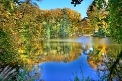 Yesterday at the pond (Tobi_2008) Tags: teich pond herbst autumn landschaft landscape bäume trees sachsen saxony deutschland germany allemagne germania