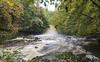 West Burton Falls. (johnandco) Tags: waterfalls floods rapids rivers streams