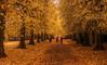 Autumn Park (aaron_eos_photography) Tags: autumn autumnleaves trees nature lurganpark park nikon nikon28300mm d810
