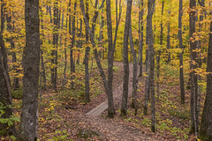 Colorful Superior Hiking Trail (Sam Wagner Photography) Tags: tree path textures autumn fall colorful changing leaves north shore northern minnesota capturemn mn midwest tourism vacation october season