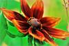 . (atsjebosma) Tags: colourful kleurrijk atsjebosma sunne sweden 2017 bloem zweden coth5 ngc