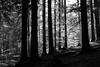 Licht und Schatten (Wald) (JBsLightAndShadow) Tags: hirschhorn eberbach odenwald badenwürttemberg deutschland germany neckarsteig wandern wanderung hiking hike reisen reise travel travelling traveling nikon nikond750 d750 tamron tamronsp2470mmf28divcusd herbst 2017 autumn fall outdoor wald forest woods lichtundschatten lightandshadow monochrome schwarzweis schwarzundweis blackandwhite