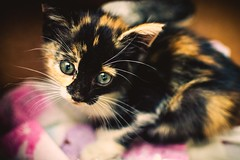 Baby (vvvvesi) Tags: cat nikon photography 35mm micro baby bulgaria animal love