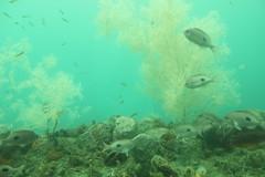 Underwater Observatory / Milford Sound