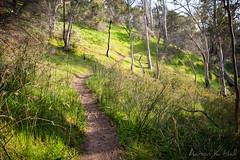 Mt Remarkable Northern Summit Wall I (Aaron K Hall) Tags: track heysentrail mount bush nationalpark trail walking green mt remarkable melrose southaustralia australia au