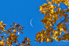 The crescent moon and fall foliage