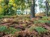 Autumn Ferns. (Flyingpast) Tags: autumn ferns nature colourful woods woodland forest tree walk beautiful perthshire scotland woodlandtrust