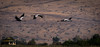 Hula Valley bird watching - Israel (magpiedom) Tags: birds bird hula valley nikon d5300 migration migrate migratory water reserve nature rest paradise watchers 55200mm israel middle east oasis