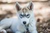 Puppy Love (Thomas Hawk) Tags: campaugusta nevadacity camp dog puppy summercamp fav10 fav25 fav50