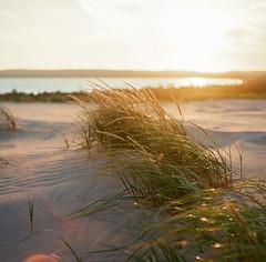 sleeping bear sunrise (phatwhistle) Tags: film mamiyac330 kodakektar100 michigan leelanau sleepingbeardunes nature sunrise dunegrass sand dunes goldenhour 120film mediumformat