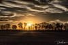 Sunset on the prairie (david_law44) Tags: springfield illinois unitedstates us sunset trees rays clouds farming