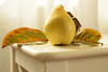 (adelina_tr) Tags: autumn stilllife quince leaves whitebackground nikond5300 abigfave fruit