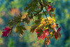 painting palette (mariola aga) Tags: autumn fall tree branch leaves colors bokeh dof coth alittlebeauty coth5 sunrays5