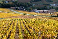 Dans le Vignoble de Pouilly-Fuissé (SMartine ♫♫) Tags: martinesodagui vignoble pouillyfuissé bourgogne