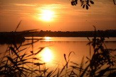 summer moods (JoannaRB2009) Tags: summer mood nature sunset sun sunlit evening calm peaceful landscape view silhouettes water reflections pond ponds miliczponds stawymilickie lowersilesia dolnyśląsk dolinabaryczy riverbaryczvalley polska poland orange copper