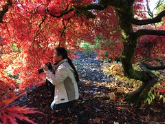 ♪Here There and Everywhere ♪ (Pierre♪ à ♪VanCouver) Tags: sachi maple burnabymountain sachiko さち子 greatvancouver autumn automne 秋 beatlessong