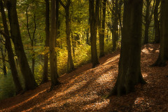 Netherton woods (dannyhow2011) Tags: trees tree wood woodland flickr forest nikon nikond810 nature