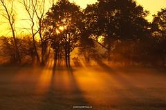 DSC05026 (ZANDVOORTfoto.nl) Tags: sunrise zonsopkomst zon dauw bomen fiets fietser santpoort zandvoort morgen ochtend morning sun longshade shade schaduw langeschaduw