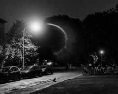 Night prowler (Mattias Lindgren) Tags: bw 50mmf18 nikond600 cat linköping sweden