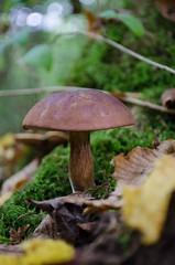 _DSC0032 (Jofriii) Tags: bois woods champignons mushroom mushrooms bolet nikon d5100 1855