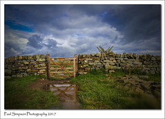 Hadrians Wall Path (Paul Simpson Photography) Tags: paulsimpsonphotography nature water puddle wall stonewall hadrianswall northumberland september2017 grass clouds roman romanwall gate woodengate imagesof imageof photoof photosof fence windswept honor8 mobilephonephotography huawei