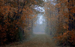 Autumn Atmosphere (hmthelords) Tags: activeassignmentweekly autumn 2017 nature country trees atmosphere fall countryliving aaw atmosphericshots bestofweek1 bestofweek2 bestofweek3 bestofweek5 bestofweek6