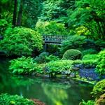 Japanese Garden 4124 A thumbnail