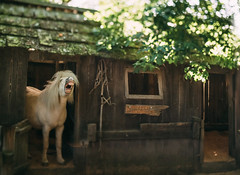 Lil Horse by candersonclick - At Willowbank Wildlife Reserve in Christchurch NZ. Not sure if this is Giggles or Koha.